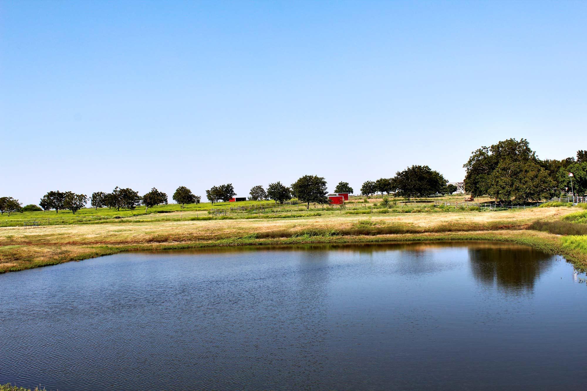 Spring Fed Pond